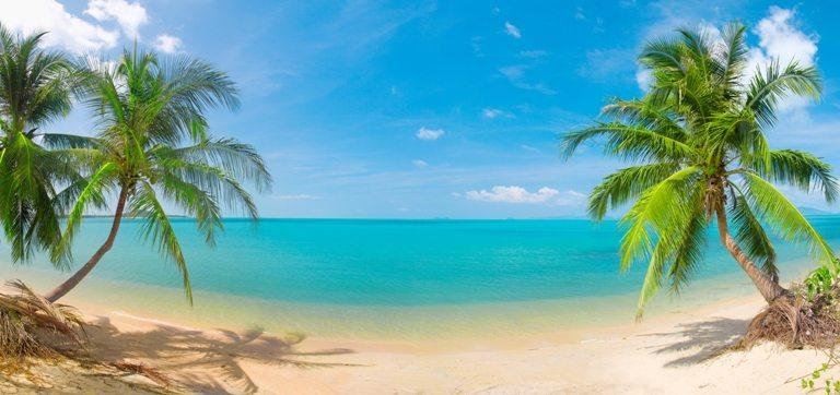 Panoramic tropical beach with coconut pa © Depositphotos