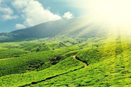 Tea plantations | Stock Photo © Dmitry Rukhlenko