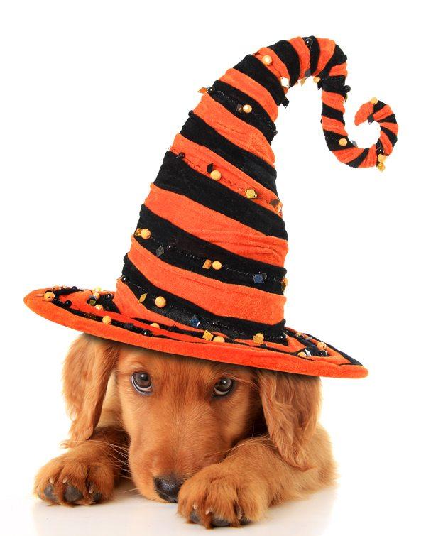 Stock Photo of Halloween puppy