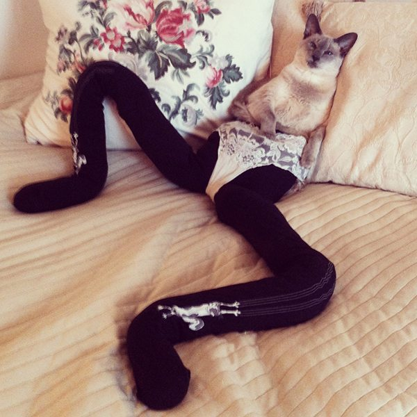 Epic cat in tights