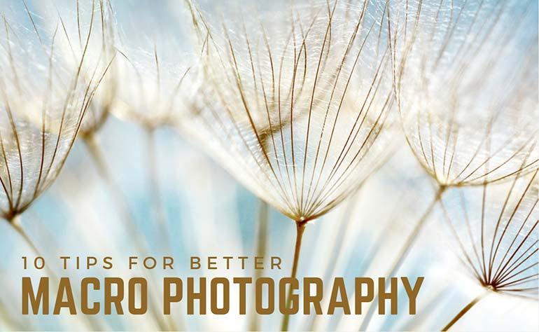 10 tips for better macro photography depositphotos blog