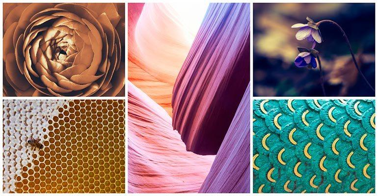 featured collection patterns in nature flowers depositphotos