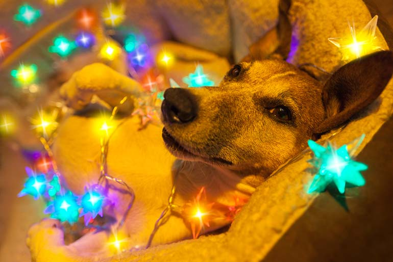 christmas photography trends dogs