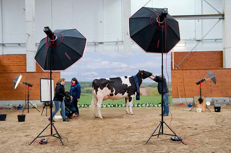 a year in pictures february 26 2016 show of the best schau der besten a beauty pageant for cows