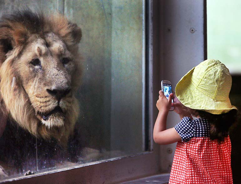 a year in pictures september 13 2016 a girl and a lion