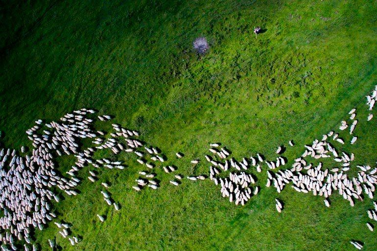 drone photography contest 2nd place nature and wildlife category