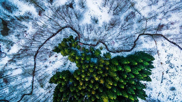 drone photography contest winner nature and wildlife