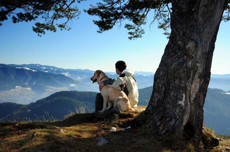 Featured collection: Pets as companions