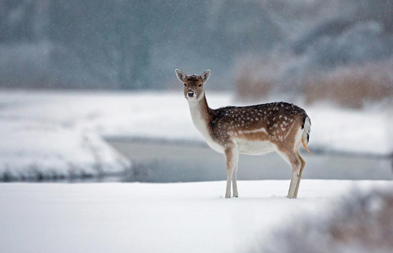 interview with a wildlife photographer menno schaefer