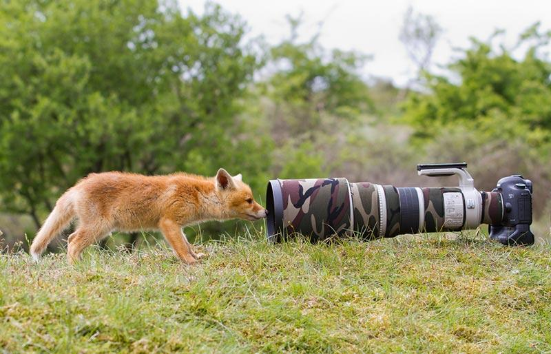 interview with a wildlife photographer national geographic