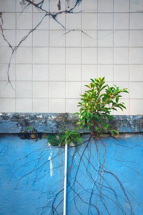 Wild Concrete #12, Hong Kong, 2013.
