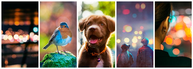 featured collection bokeh effect