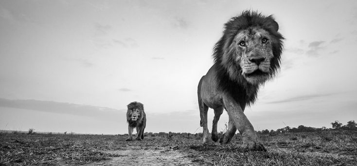 Up Close and Personal: Interview with Wildlife Photographer Anup Shah