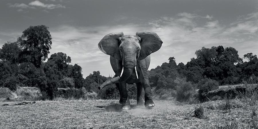 anup shah wildlife photography