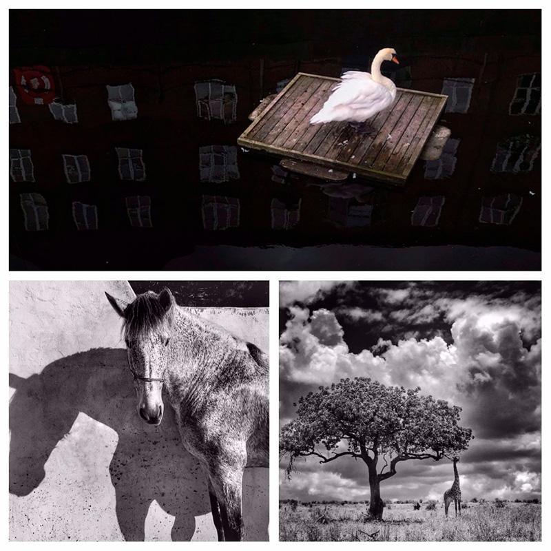 iphone photography award winners animals category