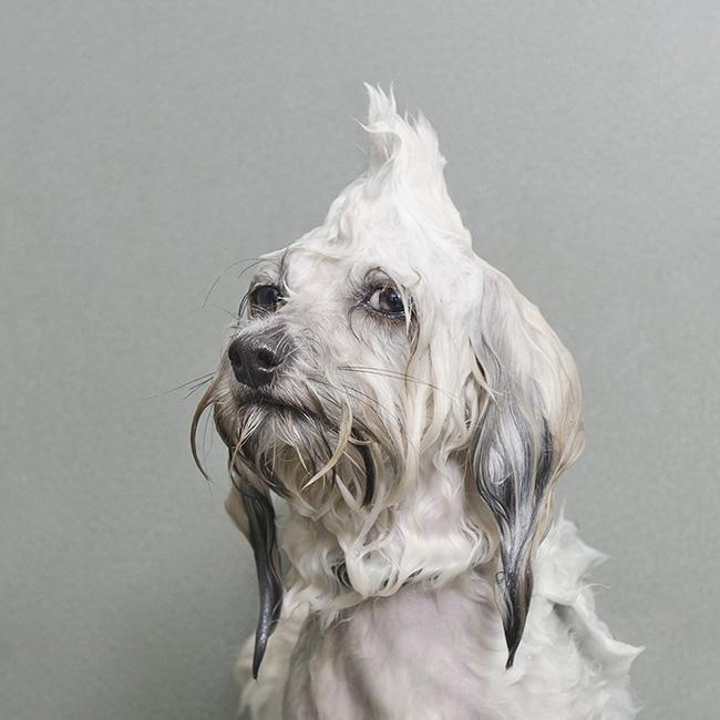 Sophie Gamand interview dog photography