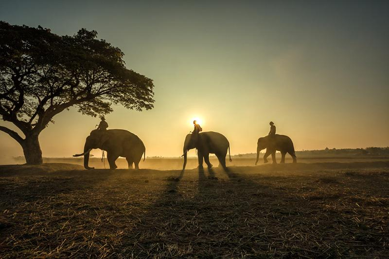 top photographs golden hour
