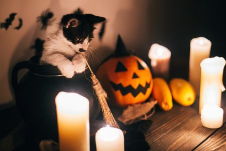 Featured Collection All the Little Things We Love About Halloween
