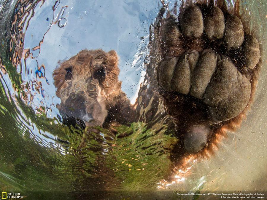 week 2 national geographic nature photographer of the year 2017 5