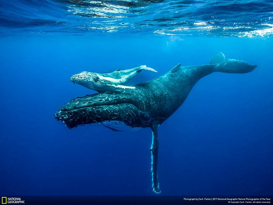 week 3 national geographic nature photographer of the year 2017 1