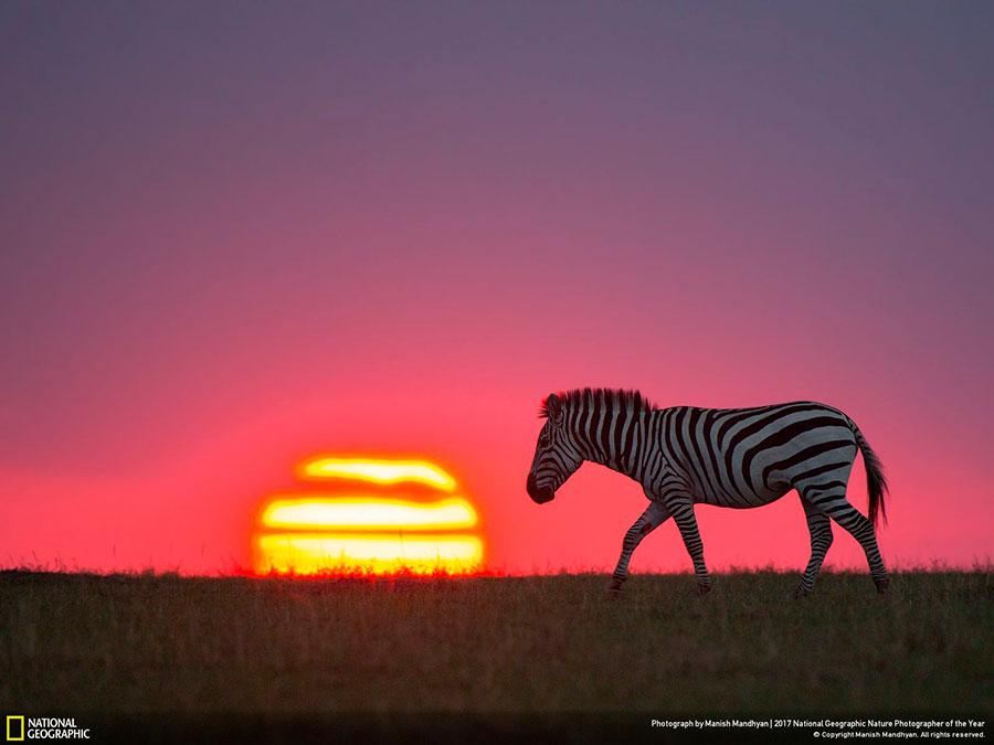 week 3 national geographic nature photographer of the year 2017 2