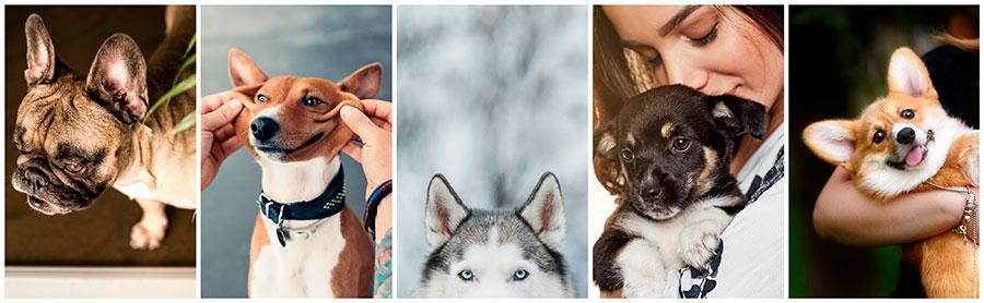 images for year of the dog stock photography
