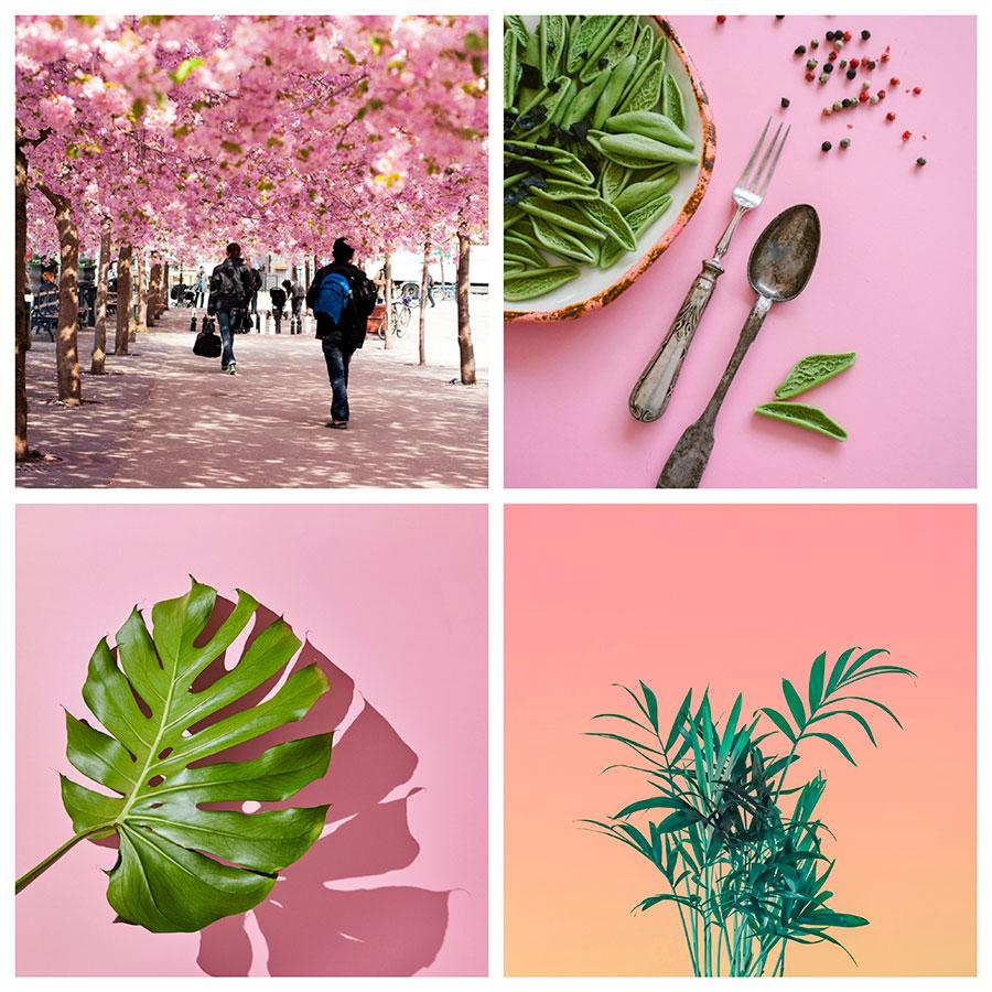 search images by color pink