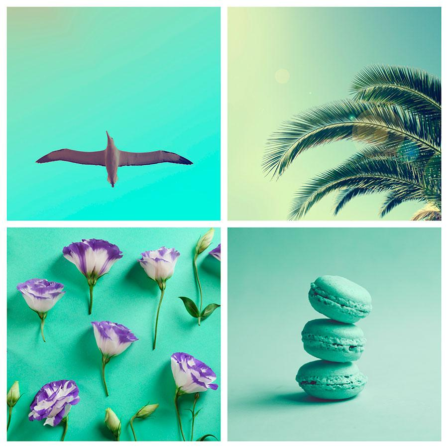 search images by color turquoise