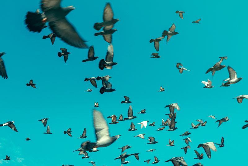 birds in flight photo from Sergey Tinyakov's portfolio