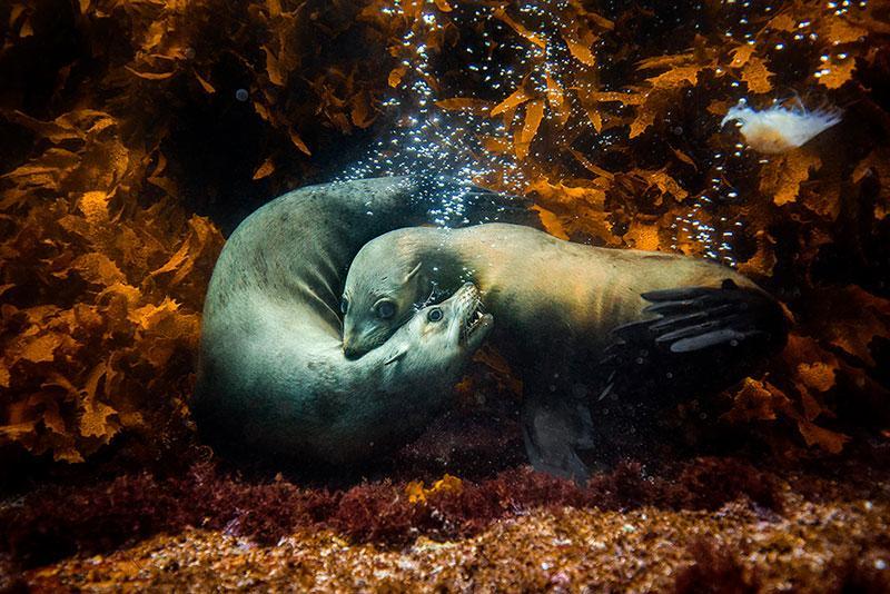 Philip-Thurston-International-Nature-Photographer-of-the-Year-2017