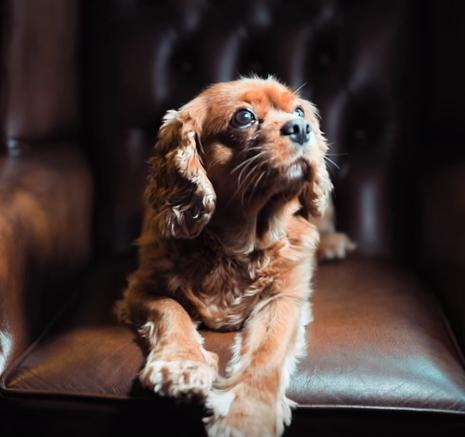 10 Camera Hacks for Dog Photography by Phil Andrew Harris