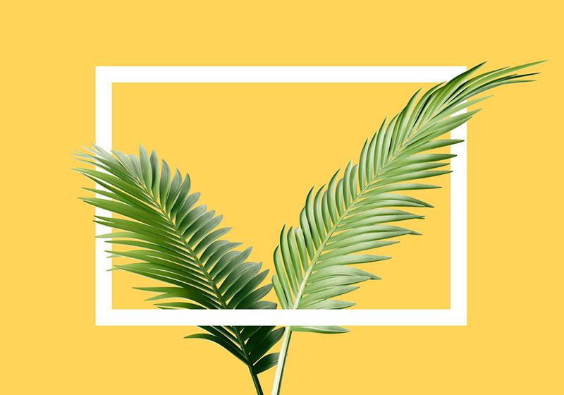 Egor Shkolnikov photography   versatile yellow background with plant
