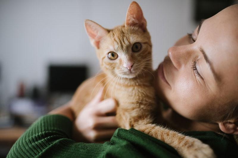 Mihajlo Ckovric stock photography cat in the arms of a woman