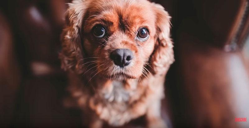 Phil-Andrew-Harris-10-Camera-Hacks-for-Dog-Photography-1