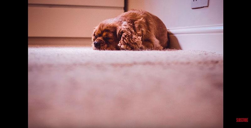 Phil-Andrew-Harris-10-Camera-Hacks-for-Dog-Photography-10