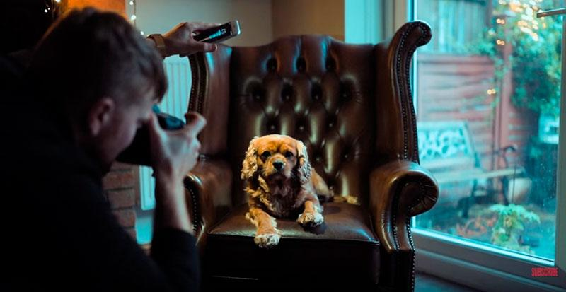 Phil-Andrew-Harris-10-Camera-Hacks-for-Dog-Photography-2