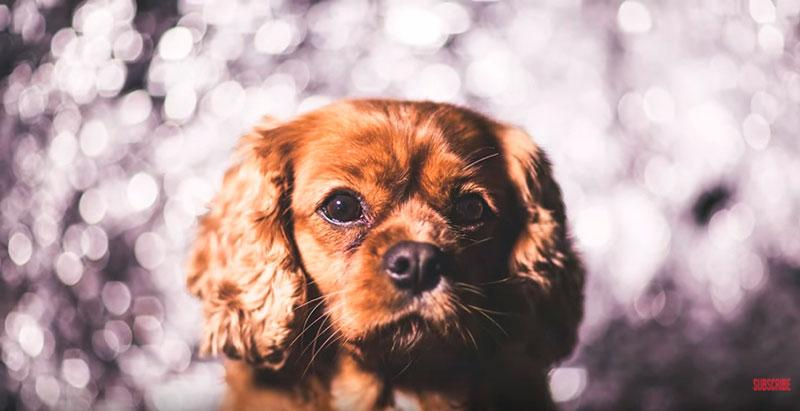 Phil-Andrew-Harris-10-Camera-Hacks-for-Dog-Photography-3