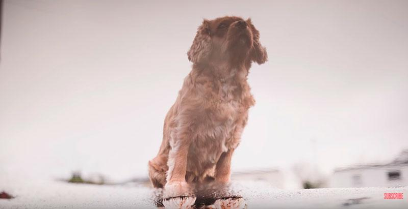 Phil-Andrew-Harris-10-Camera-Hacks-for-Dog-Photography-4