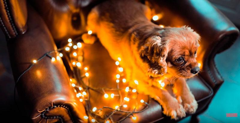 Phil-Andrew-Harris-10-Camera-Hacks-for-Dog-Photography-6