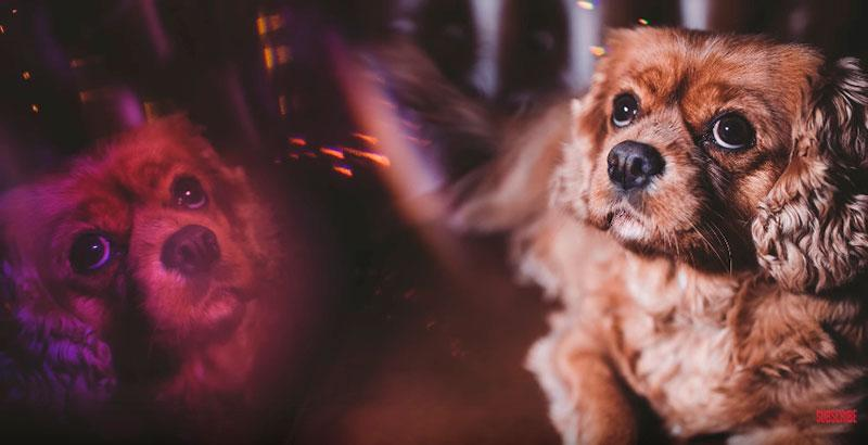 Phil-Andrew-Harris-10-Camera-Hacks-for-Dog-Photography-8