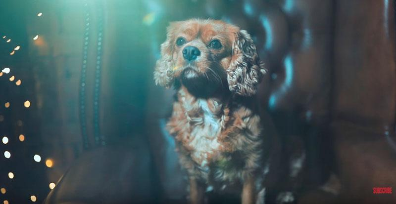 Phil-Andrew-Harris-10-Camera-Hacks-for-Dog-Photography-9