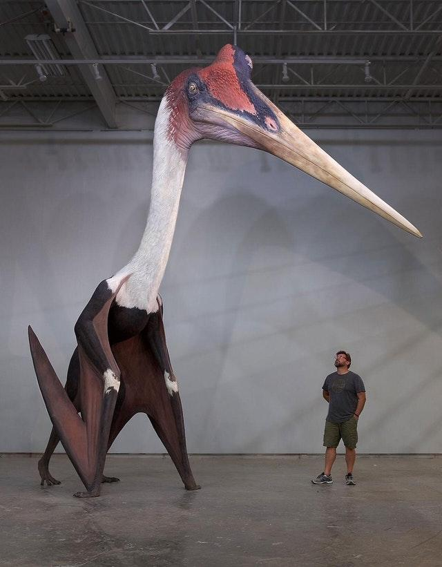 Quetzalcoatlus northropi model next to a 1.8m man. The largest known flying animal to ever exist