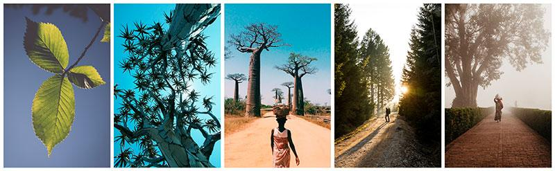 stock photographs of trees