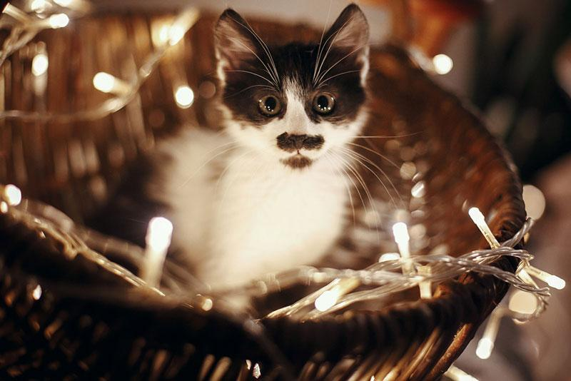 Cat in a basket with fairylights