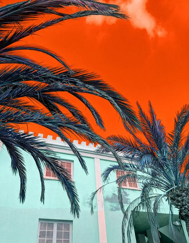 trendy images - high contrast shot of palm trees and sky