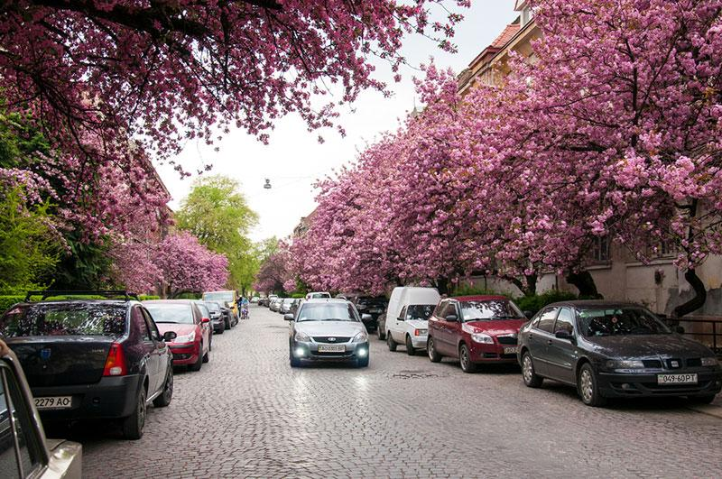 Blooming nature in Uzhhorod
