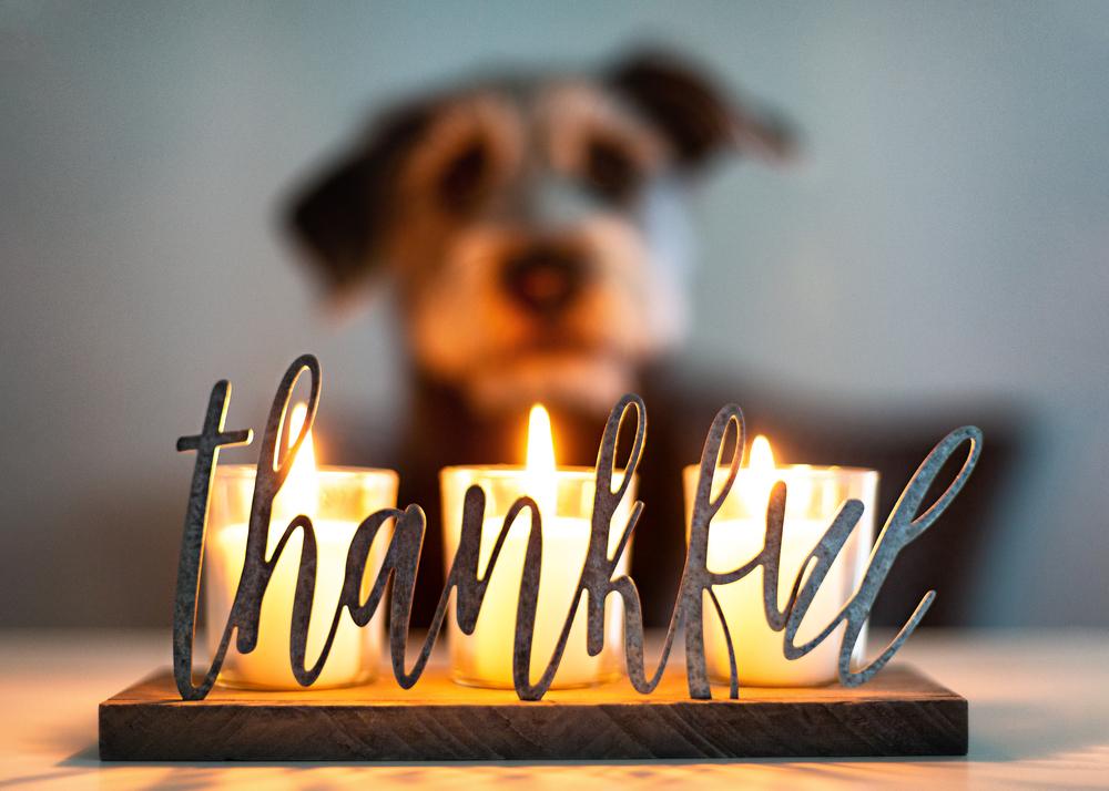 Thankful gratitude