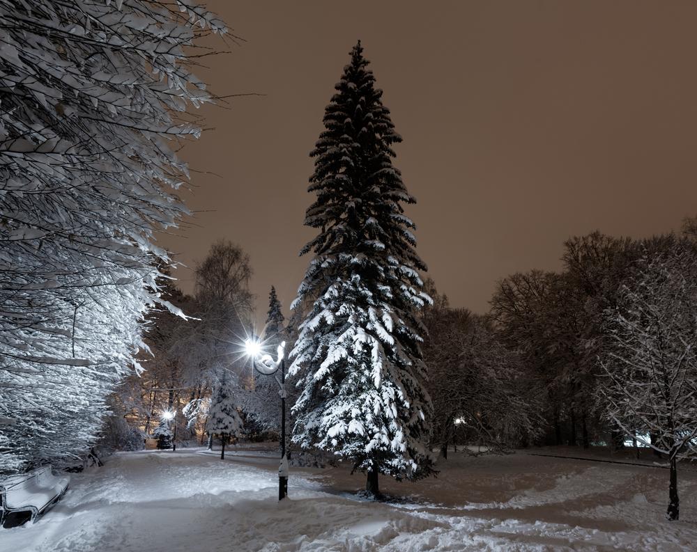 Beautiful winter night
