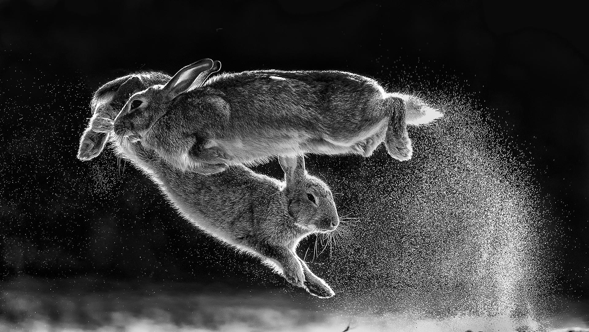 jumping rebits
