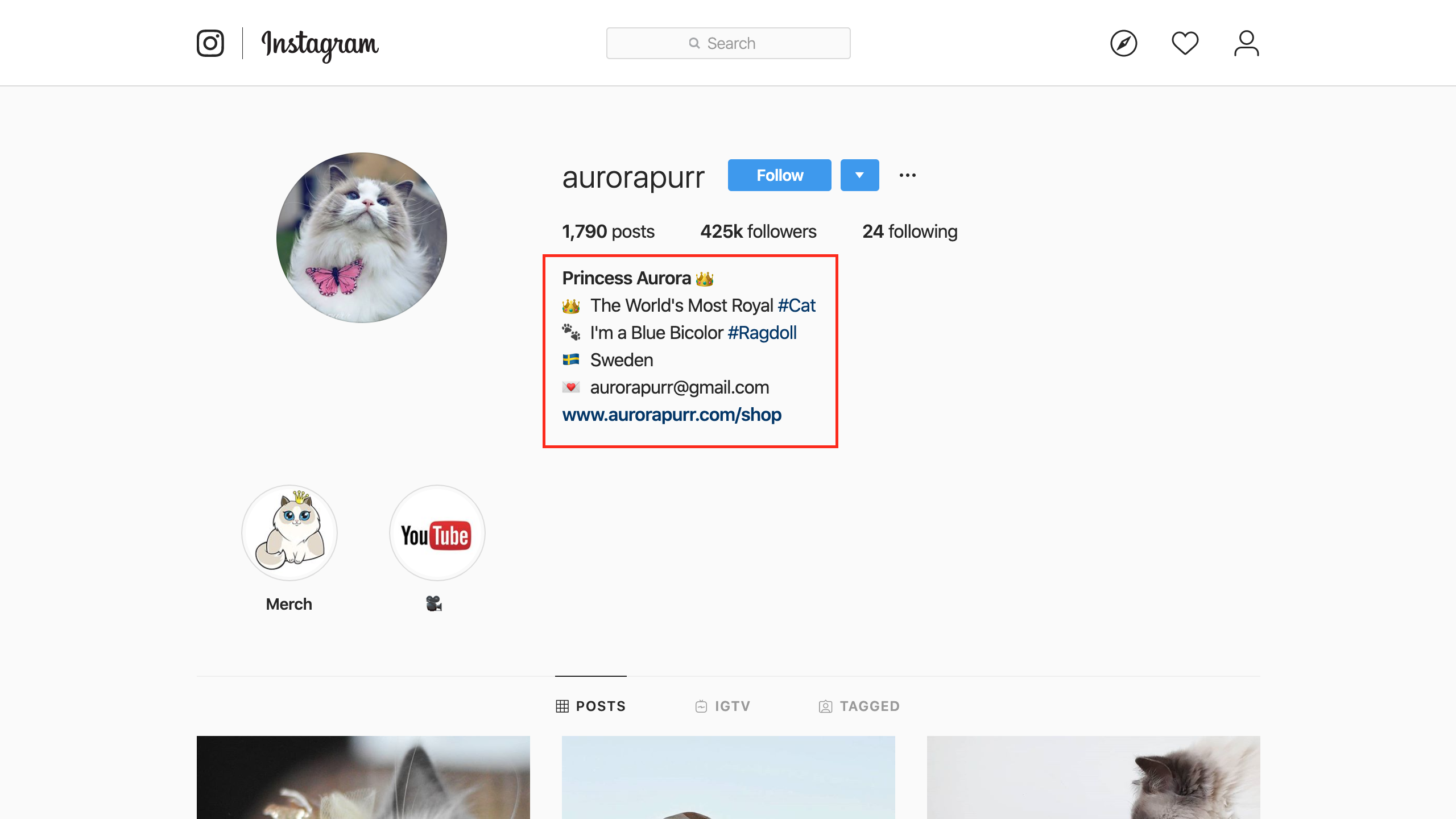 Make Your Pet Instagram Famous With These 7 Tips